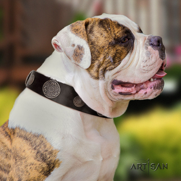 American Bulldog walking leather collar with incredible decorations for your four-legged friend