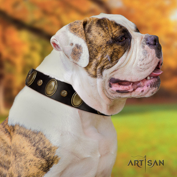 American Bulldog daily walking natural leather collar with embellishments for your dog