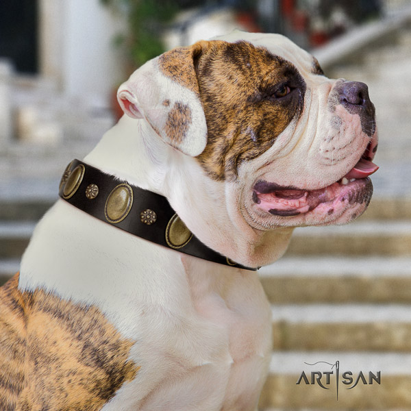 American Bulldog everyday use full grain leather collar with inimitable adornments for your four-legged friend