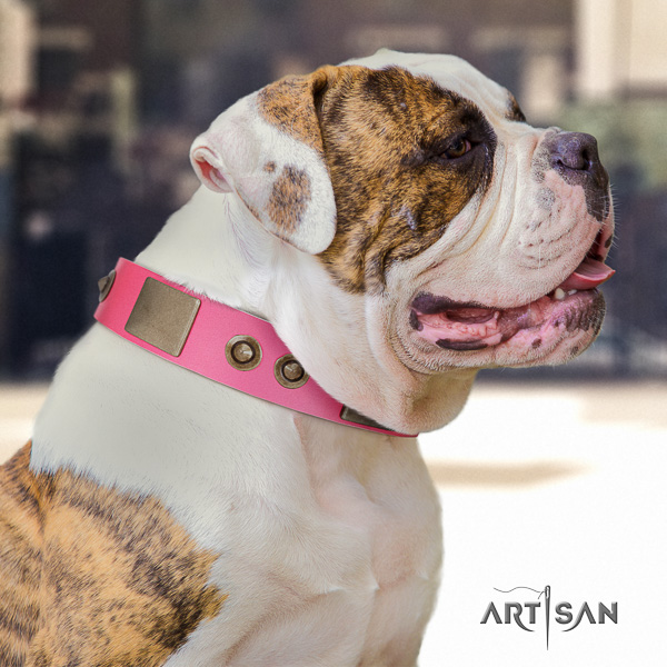 American Bulldog everyday use natural leather collar with embellishments for your canine