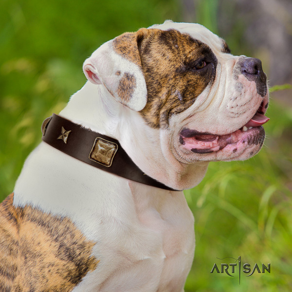 American Bulldog comfortable wearing natural leather collar with embellishments for your four-legged friend