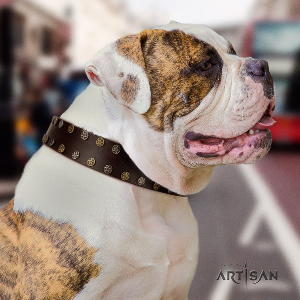 American Bulldog walking natural leather collar with significant embellishments for your canine
