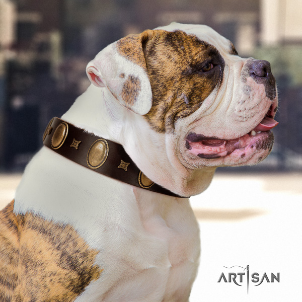American Bulldog comfy wearing natural leather collar with unique embellishments for your canine