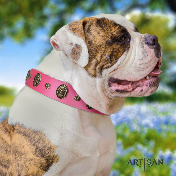 American Bulldog everyday walking natural leather collar with studs for your doggie