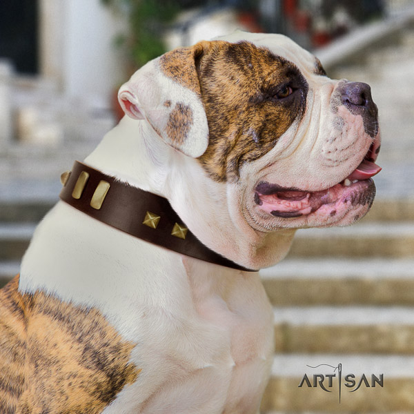 American Bulldog daily walking leather collar with stylish design adornments for your four-legged friend
