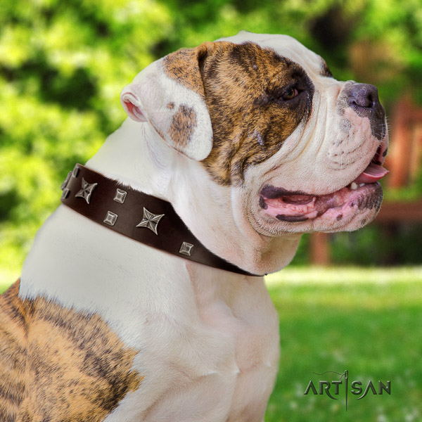 American Bulldog comfy wearing leather collar with amazing adornments for your canine