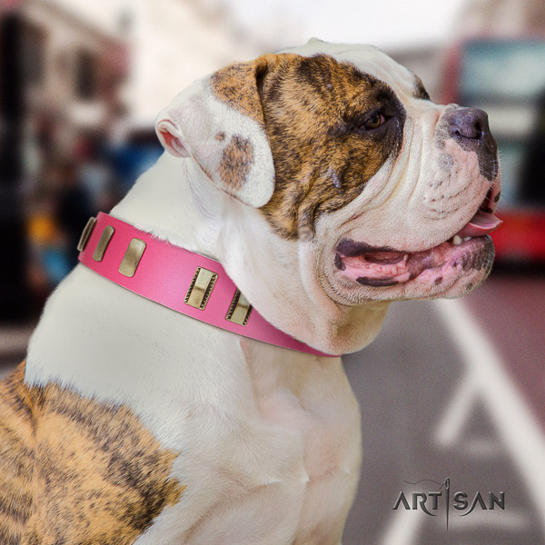 American Bulldog fancy walking genuine leather collar with awesome studs for your canine