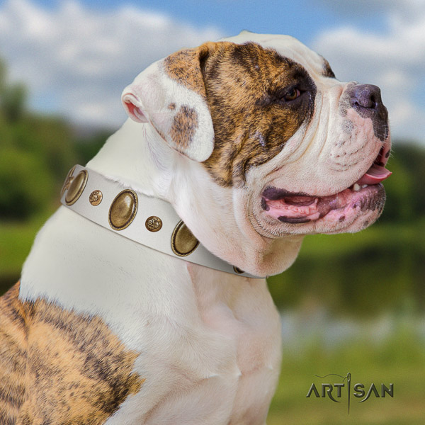 American Bulldog everyday use full grain leather collar with unique adornments for your canine