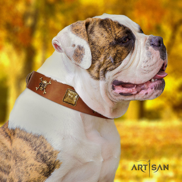 American Bulldog handy use full grain leather collar with impressive embellishments for your pet