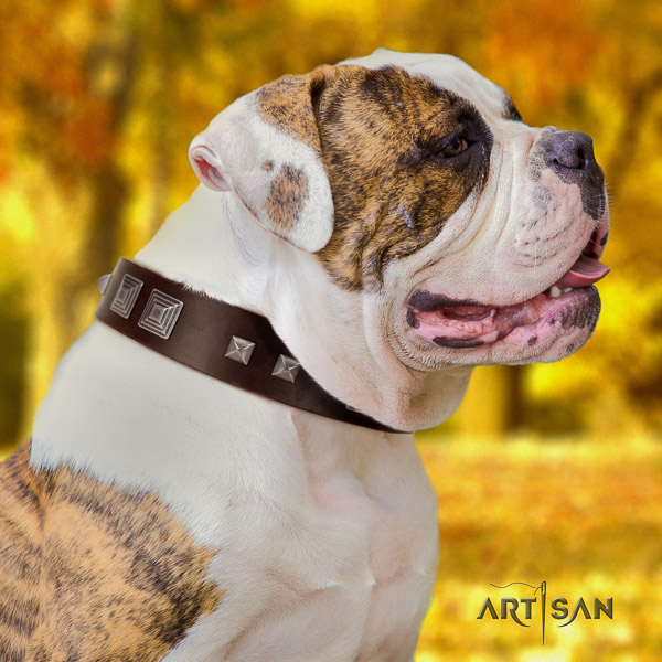American Bulldog daily use leather collar with inimitable embellishments for your pet