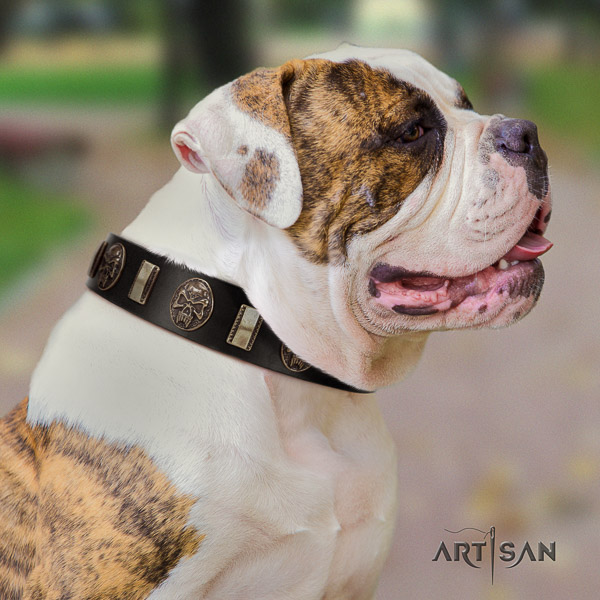 American Bulldog comfortable wearing genuine leather collar with embellishments for your dog