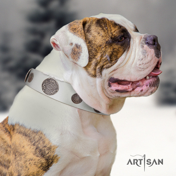 American Bulldog walking leather collar with impressive embellishments for your canine
