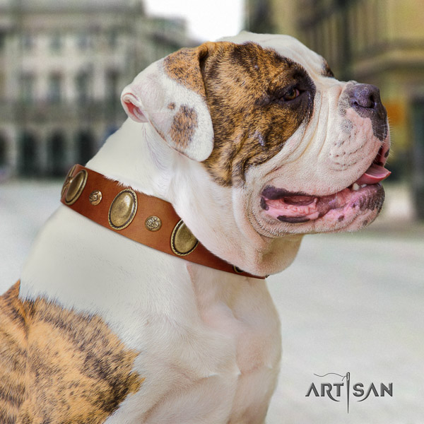 American Bulldog everyday walking leather collar with unique decorations for your canine