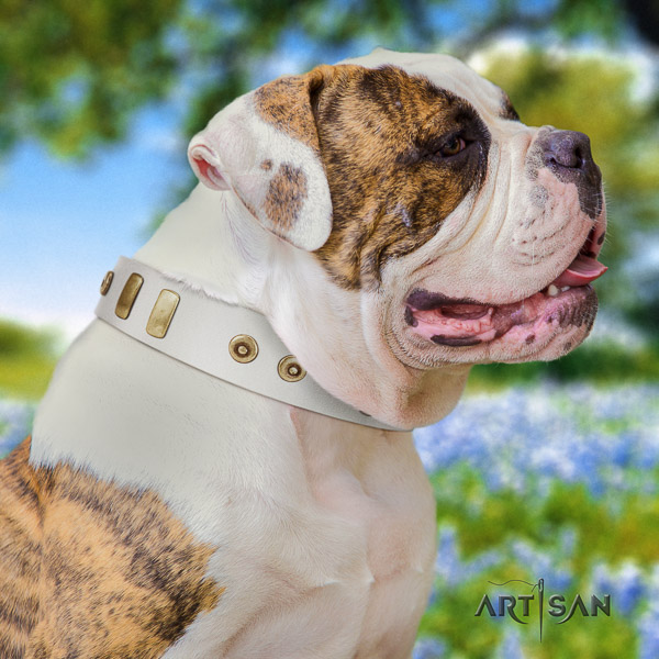 American Bulldog easy wearing natural leather collar with fashionable adornments for your canine