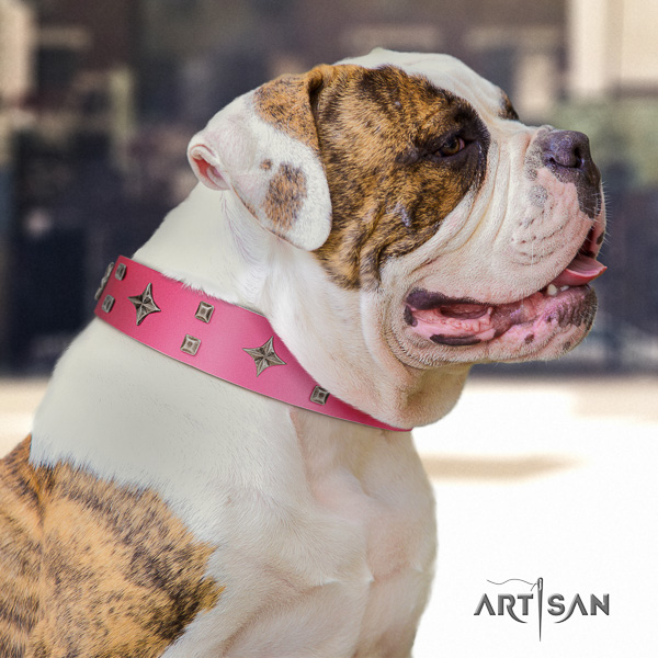American Bulldog comfortable wearing full grain leather collar with fashionable embellishments for your dog