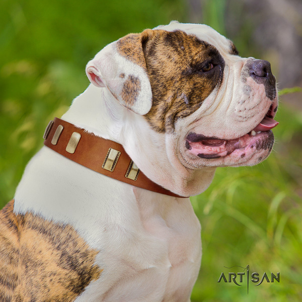 American Bulldog walking leather collar with fashionable decorations for your four-legged friend