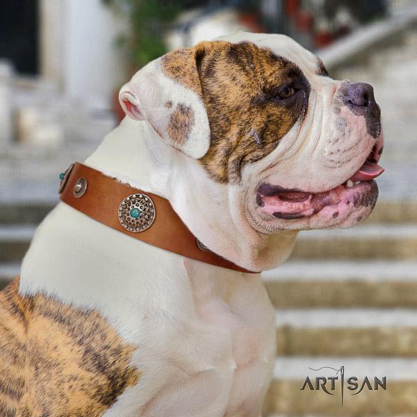 American Bulldog basic training genuine leather collar with awesome decorations for your four-legged friend