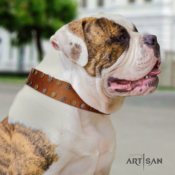 American Bulldog fancy walking leather collar with awesome decorations for your doggie