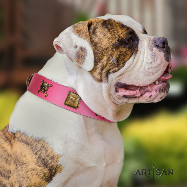 American Bulldog daily use full grain leather collar with unusual studs for your dog