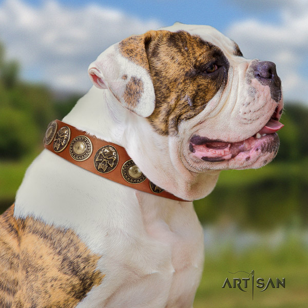 American Bulldog walking full grain natural leather collar with studs for your canine