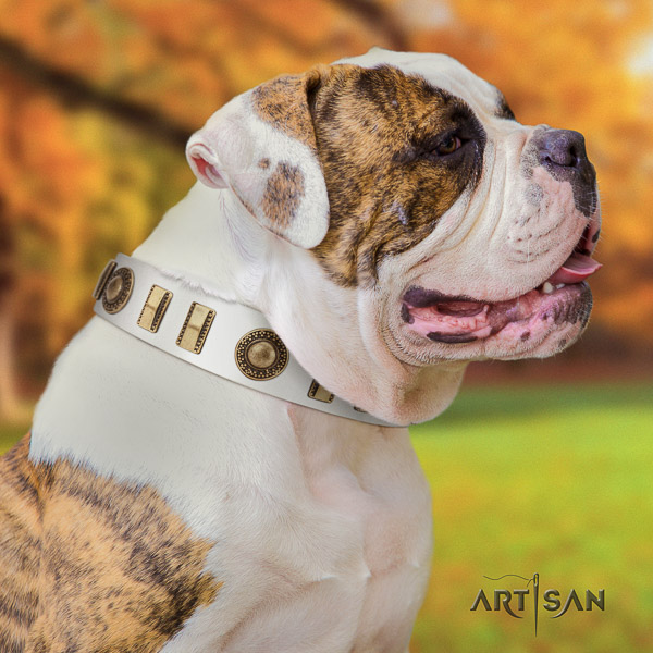 American Bulldog everyday walking natural leather collar with stunning studs for your doggie