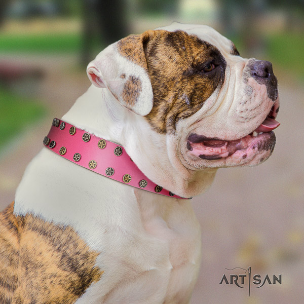 American Bulldog everyday walking full grain leather collar with inimitable decorations for your four-legged friend