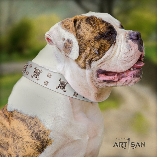 American Bulldog daily walking leather collar with unique embellishments for your canine