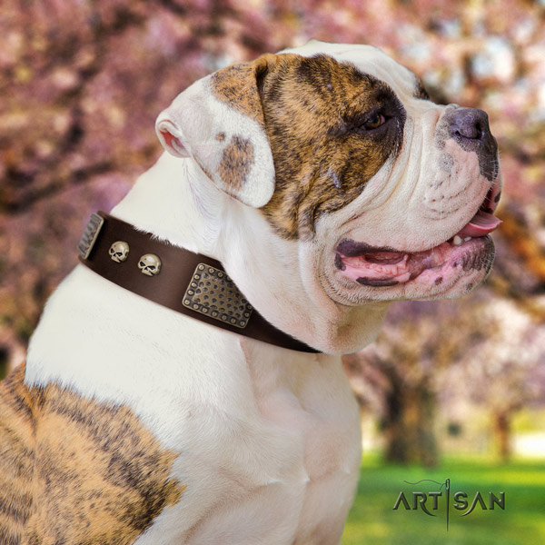 American Bulldog top notch leather dog collar with decorations for daily use