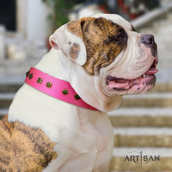 American Bulldog stylish design leather dog collar with studs for everyday use