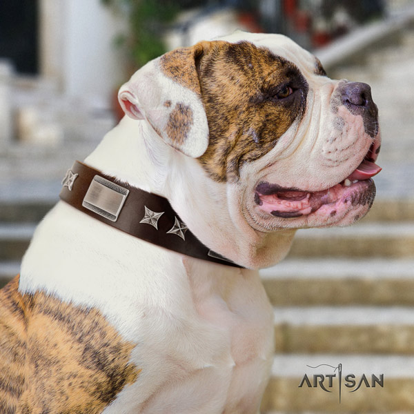 American Bulldog unique leather dog collar with adornments for daily walking