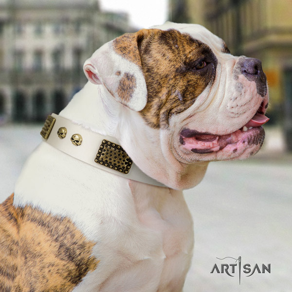 American Bulldog impressive full grain leather dog collar with studs for easy wearing