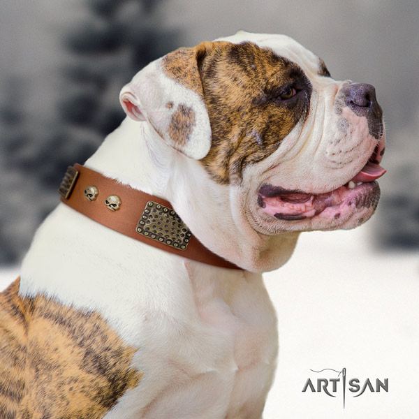 American Bulldog remarkable full grain leather dog collar with decorations for walking