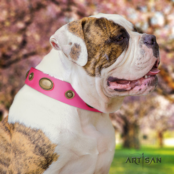 American Bulldog stylish leather dog collar with studs for fancy walking