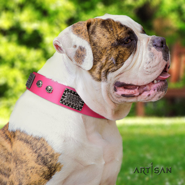 American Bulldog amazing leather dog collar with decorations for fancy walking