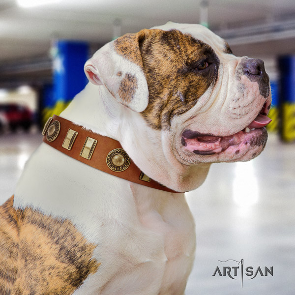 American Bulldog walking full grain leather collar with exceptional embellishments for your dog