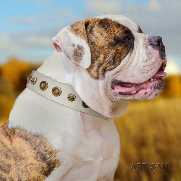 American Bulldog handy use leather collar with top notch studs for your pet