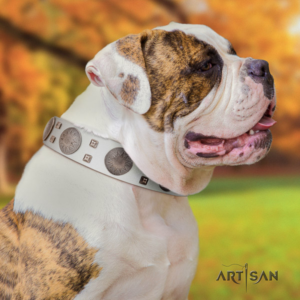 American Bulldog stylish walking genuine leather collar with top notch decorations for your canine