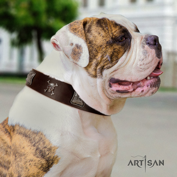 American Bulldog easy wearing genuine leather collar with unusual studs for your four-legged friend