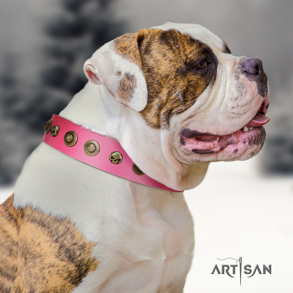American Bulldog stylish walking natural leather collar with inimitable decorations for your pet