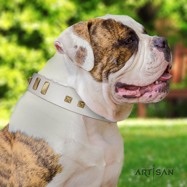 American Bulldog basic training natural leather collar with trendy studs for your four-legged friend