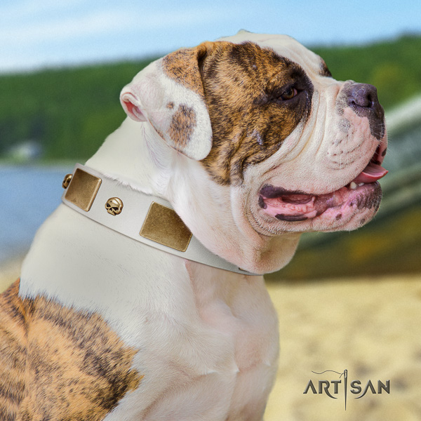 American Bulldog stylish walking natural leather collar with stylish design studs for your doggie