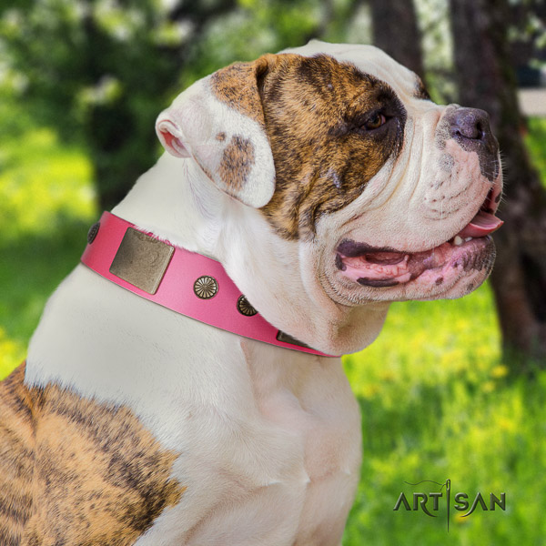 American Bulldog stylish walking full grain natural leather collar with decorations for your doggie