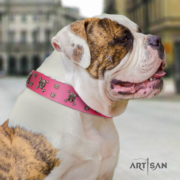 American Bulldog everyday walking leather collar with incredible embellishments for your dog