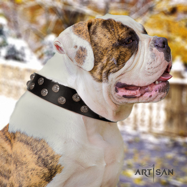 American Bulldog daily use genuine leather collar with inimitable adornments for your doggie