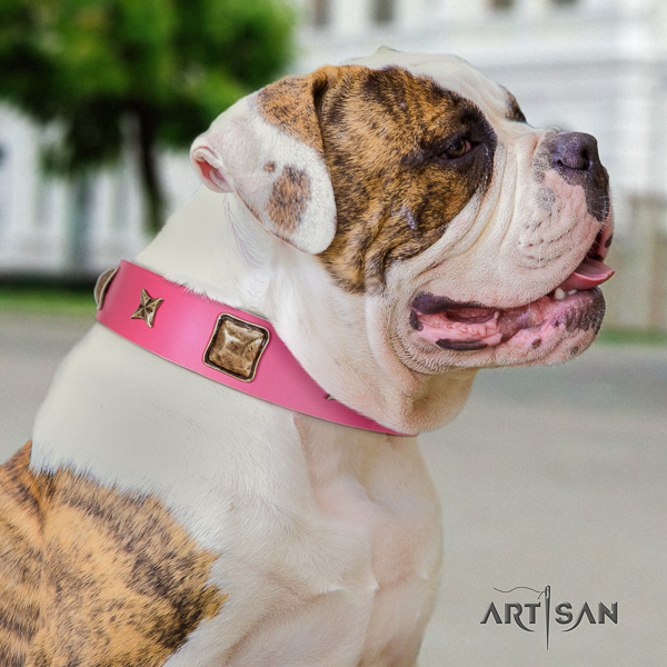 American Bulldog handy use full grain natural leather collar with embellishments for your pet