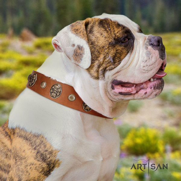 American Bulldog comfortable wearing full grain leather collar with decorations for your dog