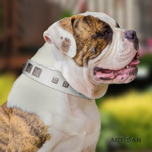 American Bulldog easy wearing full grain leather collar with unique studs for your pet