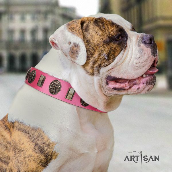 American Bulldog comfortable wearing leather collar with embellishments for your dog