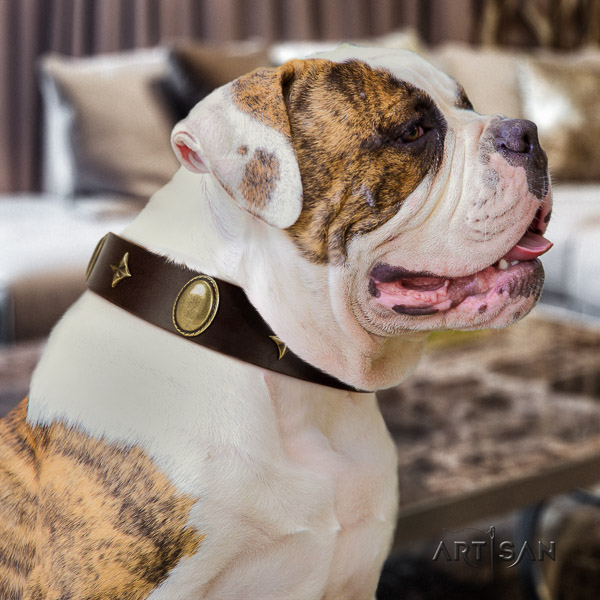 American Bulldog stylish walking genuine leather collar with inimitable decorations for your four-legged friend