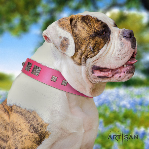 American Bulldog daily use full grain leather collar with exquisite decorations for your doggie